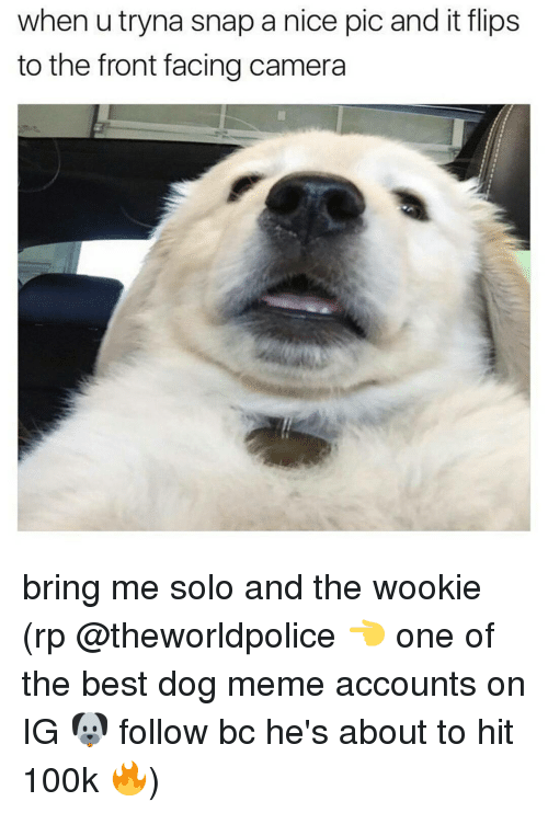 Bring Me Solo: when utryna snap a nice pic and it flips  to the front facing camera bring me solo and the wookie (rp @theworldpolice 👈 one of the best dog meme accounts on IG 🐶 follow bc he's about to hit 100k 🔥)