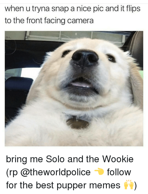 Bring Me Solo: when utryna snap a nice pic and it flips  to the front facing camera bring me Solo and the Wookie (rp @theworldpolice 👈 follow for the best pupper memes 🙌)