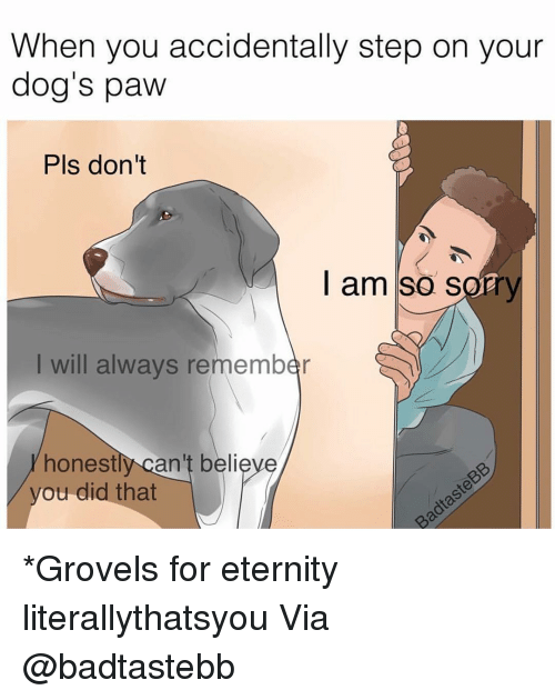 Memes, 🤖, and Pls: When you accidentally step on your  dog's paw  Pls don't  I am so sorry  I will always remember  honestly can't belie  you did that *Grovels for eternity literallythatsyou Via @badtastebb
