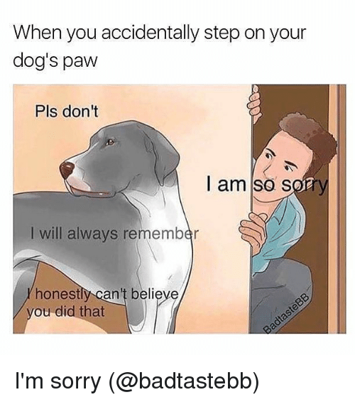 Dogs, Memes, and Sorry: When you accidentally step on your  dog's paw  Pls dont  I am so sofry  I will always remember  honestly can't believe  ou did that I'm sorry (@badtastebb)