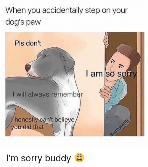 Dank, Dogs, and Sorry: When you accidentally step on your  dog's paw  Pls don't  I am so sory  I will always remember  honestly can't believe  ou did that I'm sorry buddy 😩