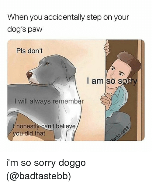 Dogs, Memes, and Sorry: When you accidentally step on your  dog's paw  Pls don't  I am so s  I will always remember  honestly can't believe  ou did that i'm so sorry doggo (@badtastebb)