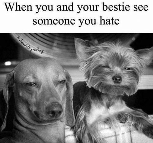 bestie: When you and your bestie see  someone you hate  wherehAyedago