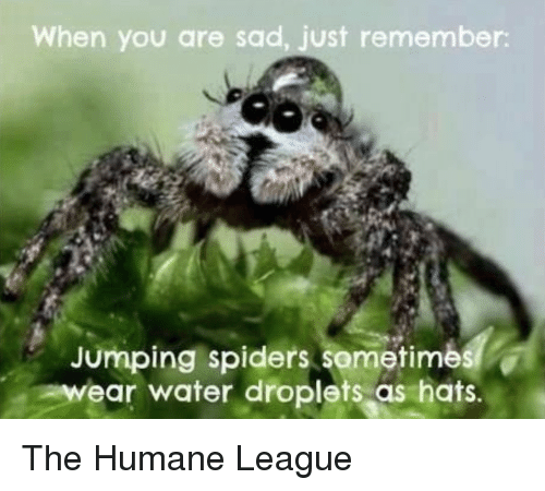 Spiders, Water, and Sad: When you are sad, just remember  Jumping spiders sometimes  wear water droplets as hats. The Humane League