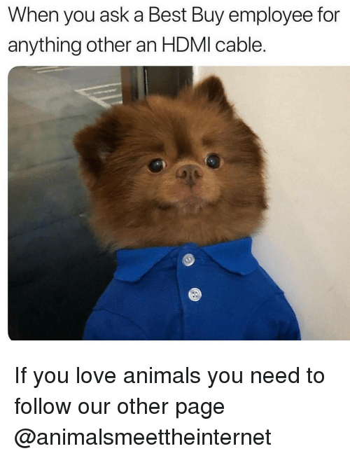 Best Buy: When you ask a Best Buy employee for  anything other an HDMI cable. If you love animals you need to follow our other page @animalsmeettheinternet