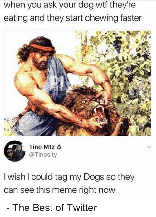 Dank, Dogs, and Meme: when you ask your dog wtf they're  eating and they start chewing faster  Tino Mtz A  @Tinosity  I wish I could tag my Dogs so they  can see this meme right now - The Best of Twitter