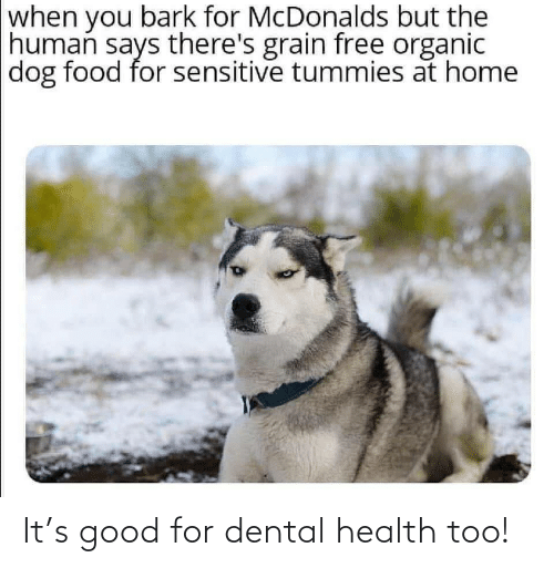 Says: when you bark for McDonalds but the  human says there's grain free organic  dog food for sensitive tummies at home It's good for dental health too!