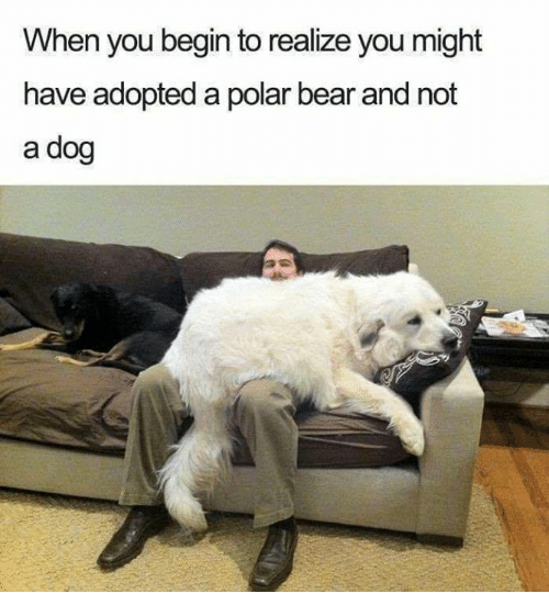 polarized: When you begin to realize you might  have adopted a polar bear and not  a dog