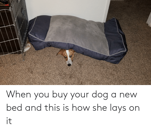 Lay's: When you buy your dog a new bed and this is how she lays on it