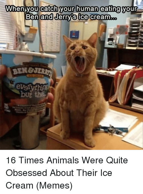 Animals, Memes, and Ice Cream: When you catch your human eating  your  Ben and Jerrvis ice creamm  BEN&  evslythi 16 Times Animals Were Quite Obsessed About Their Ice Cream (Memes)