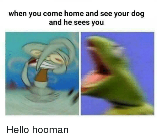 Hello, Home, and Dog: when you come home and see your dog  and he sees you <p>Hello hooman</p>
