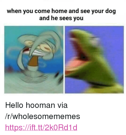 "Hello, Home, and Dog: when you come home and see your dog  and he sees you <p>Hello hooman via /r/wholesomememes <a href=""https://ift.tt/2k0Rd1d"">https://ift.tt/2k0Rd1d</a></p>"