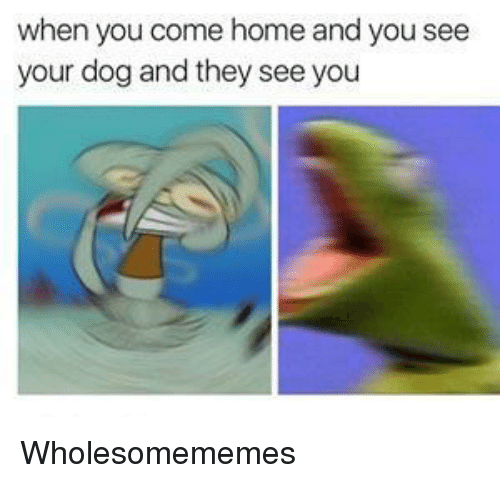 Home, Dog, and They: when you come home and you see  your dog and they see you Wholesomememes
