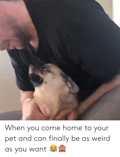 Weird, Home, and Can: When you come home to your pet and can finally be as weird as you want 😂🙈