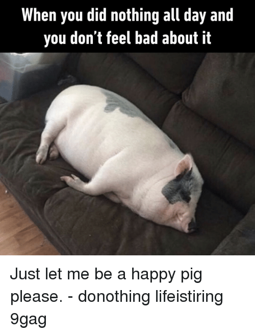9gag, Bad, and Memes: When you did nothing all day and  you don't feel bad about it Just let me be a happy pig please.⠀ -⠀ donothing lifeistiring 9gag