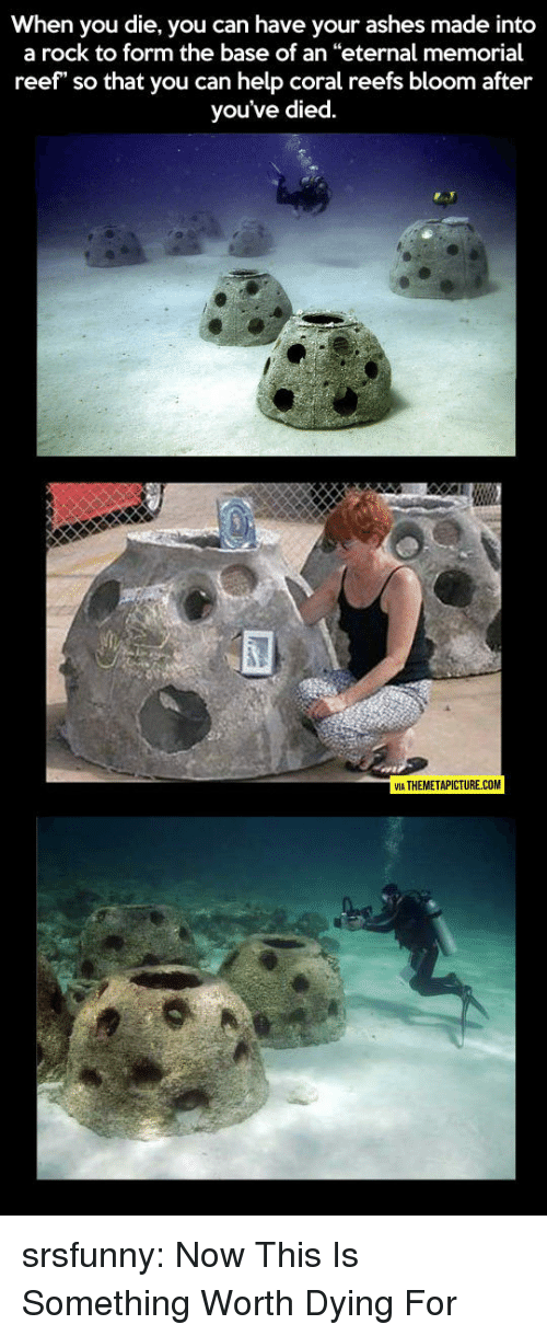"Tumblr, Blog, and Help: When you die, you can have your ashes made into  a rock to form the base of an ""eternal memorial  reef"" so that you can help coral reefs bloom after  you've died.  VIA THEMETAPICTURE.COM srsfunny:  Now This Is Something Worth Dying For"