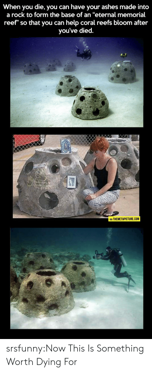 "Tumblr, Blog, and Help: When you die, you can have your ashes made into  a rock to form the base of an ""eternal memorial  reef"" so that you can help coral reefs bloom after  you've died.  VIA THEMETAPICTURE.COM srsfunny:Now This Is Something Worth Dying For"