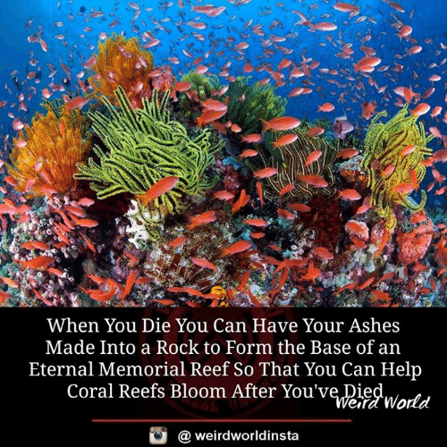 Memes, Help, and World: When You Die You Can Have Your Ashes  Made Into a Rock to Form the Base of an  Eternal Memorial Reef So That You Can Help  Coral Reefs Bloom After You've Died  ITt  efd World  @ weirdworldinsta