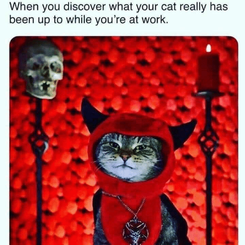 Memes, Work, and Discover: When you discover what your cat really has  been up to while you're at work.