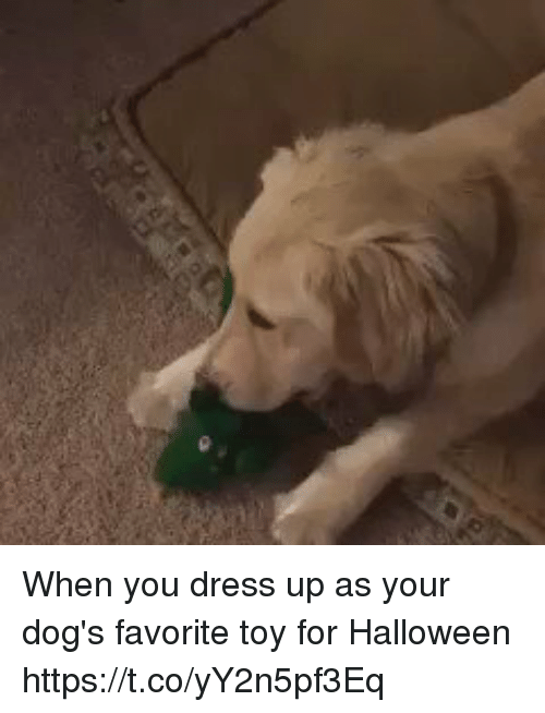 Dogs, Halloween, and Dress: When you dress up as your dog's favorite toy for Halloween https://t.co/yY2n5pf3Eq