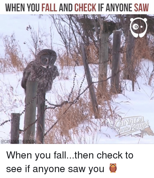 Fall, Memes, and Saw: WHEN YOU FALL AND CHECK IF ANYONE SAWW  @CANADAINTHEROOG When you fall...then check to see if anyone saw you 🦉