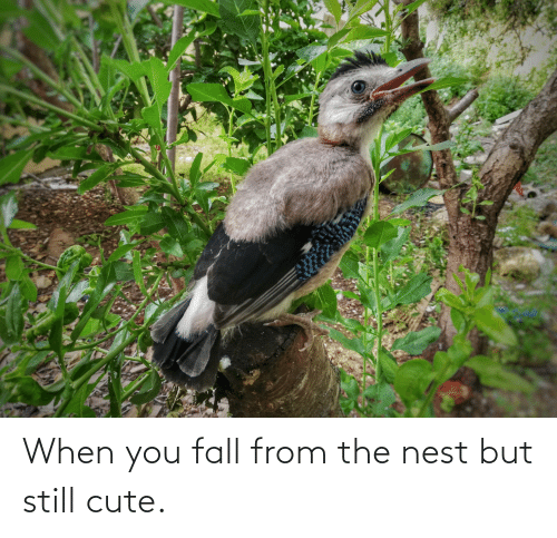 Nest: When you fall from the nest but still cute.