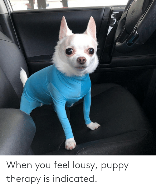 lousy: When you feel lousy, puppy therapy is indicated.
