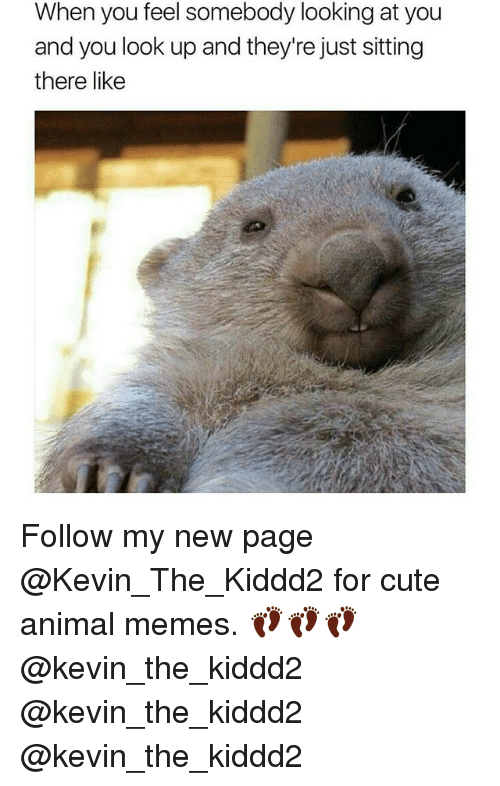 Cute, Memes, and Animal: When you feel somebody looking at you  and you look up and they're just sitting  there like Follow my new page @Kevin_The_Kiddd2 for cute animal memes. 👣👣👣@kevin_the_kiddd2 @kevin_the_kiddd2 @kevin_the_kiddd2