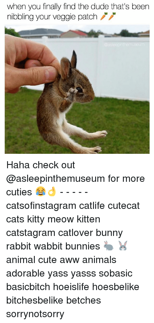 Animals, Aww, and Bunnies: when you finally find the dude that's been  nibbling your veggie patch Haha check out @asleepinthemuseum for more cuties 😂👌 - - - - - catsofinstagram catlife cutecat cats kitty meow kitten catstagram catlover bunny rabbit wabbit bunnies 🐇 🐰 animal cute aww animals adorable yass yasss sobasic basicbitch hoeislife hoesbelike bitchesbelike betches sorrynotsorry