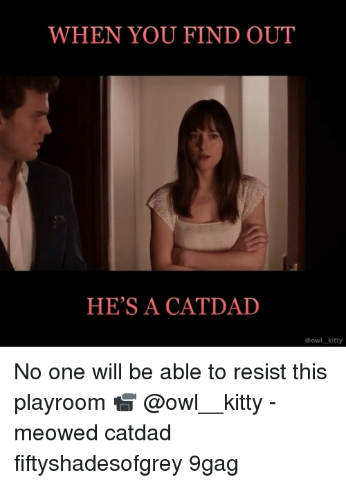 9gag, Memes, and 🤖: WHEN YOU FIND OUT  HE'S A CATDAD  @owl kitty No one will be able to resist this playroom 📹 @owl__kitty - meowed catdad fiftyshadesofgrey 9gag