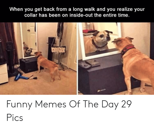 Funny, Inside Out, and Memes: When you get back from a long walk and you realize your  collar has been on inside-out the entire time. Funny Memes Of The Day 29 Pics