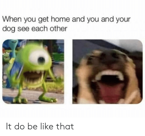 Be Like, Home, and Dog: When you get home and you and your  dog see each other It do be like that