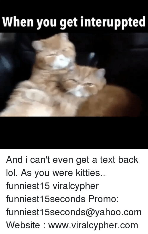Funny, Kitties, and Lol: When you get interuppted And i can't even get a text back lol. As you were kitties.. funniest15 viralcypher funniest15seconds Promo: funniest15seconds@yahoo.com Website : www.viralcypher.com