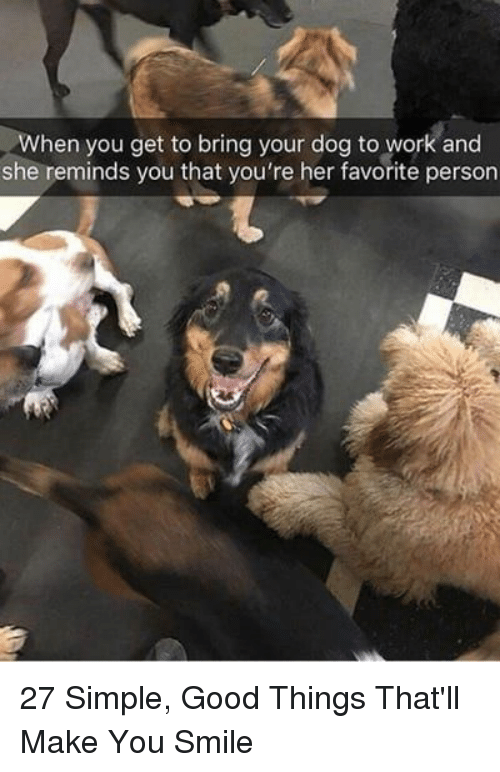 Work, Good, and Smile: When you get to bring your dog to work and  she reminds you that you're her favorite person 27 Simple, Good Things That'll Make You Smile