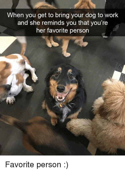 Work, Her, and Dog: When you get to bring your dog to work  and she reminds you that you're  her favorite person Favorite person :)