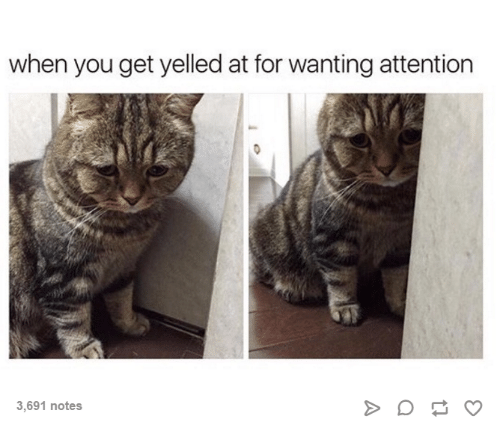 Dank, 🤖, and Yelle: when you get yelled at for wanting attention  3,691 notes
