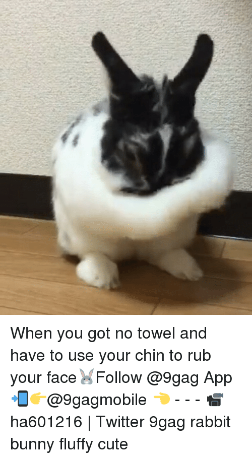 Fluffiness: When you got no towel and have to use your chin to rub your face🐰Follow @9gag App📲👉@9gagmobile 👈 - - - 📹ha601216 | Twitter 9gag rabbit bunny fluffy cute
