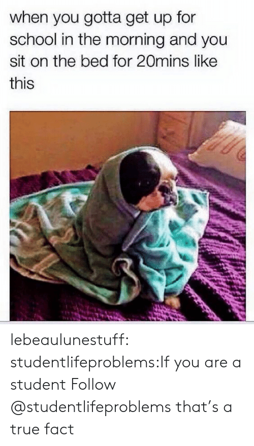 true fact: when you gotta get up for  school in the morning and you  sit on the bed for 20mins like  this lebeaulunestuff:  studentlifeproblems:If you are a student Follow @studentlifeproblems that's a true fact