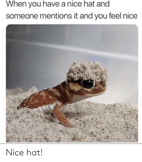 Nice, You, and Hat: When you have a nice hat and  someone mentions it and you feel nice Nice hat!