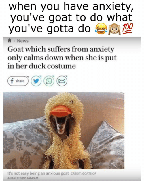 Anaconda, Instagram, and News: when you have anxiety,  you've goat to do what  you've gotta do  100  News  Goat which suffers from anxiety  only calms down when she is put  in her duck costume  It's not easy being an anxious goat CREDIT GOATS O  ANARCHY/INSTAGRAM