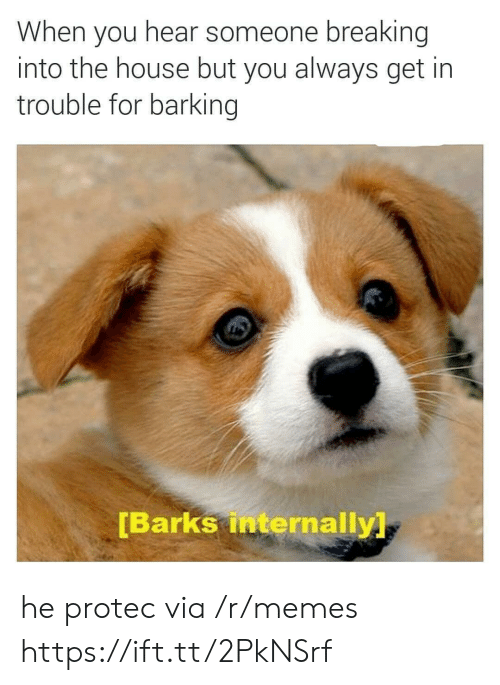 internally: When you hear someone breaking  into the house but you always get in  trouble for barking  Barks internally he protec via /r/memes https://ift.tt/2PkNSrf