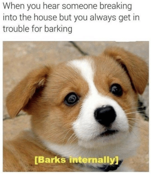 internally: When you hear someone breaking  into the house but you always get in  trouble for barking  [Barks internally]