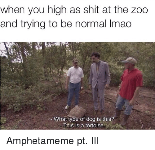 Lmao, Shit, and Dank Memes: when you high as shit at the zoo  and trying to be normal lmao  What type of dog is this?  This is a tortoise Amphetameme pt. III