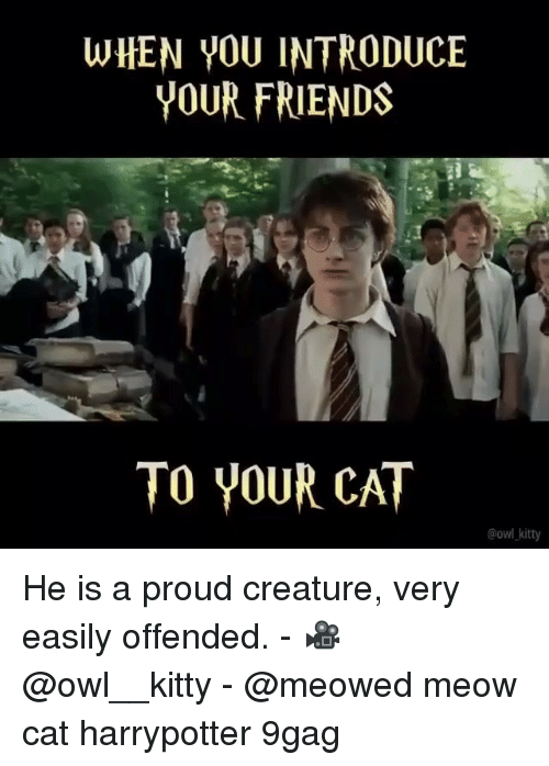 9gag, Friends, and Memes: WHEN YOU INTRODUCE  YOUR FRIENDS  TO YOUR CAT  @owl kitty He is a proud creature, very easily offended. - 🎥 @owl__kitty - @meowed meow cat harrypotter 9gag
