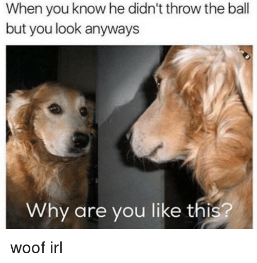 Dog IRL: When you know he didn't throw the ball  but you look anyways  Why are you like this? woof irl