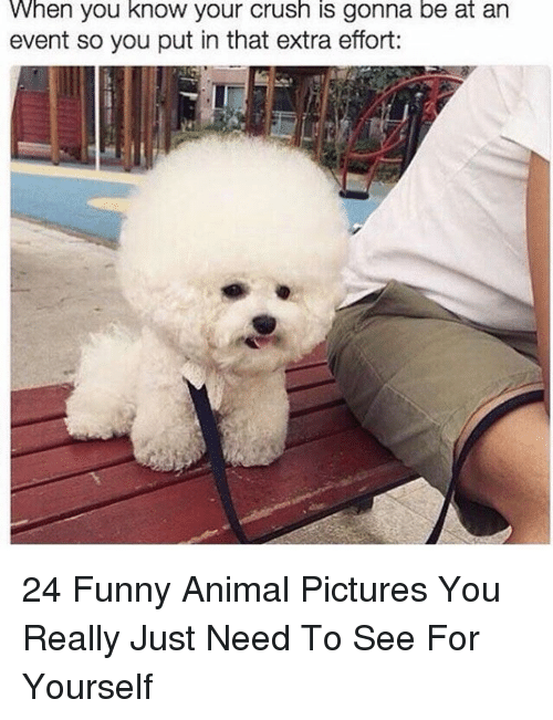 Crush, Funny, and Animal: When you know your crush is gonna be at an  event so you put in that extra effort: 24 Funny Animal Pictures You Really Just Need To See For Yourself
