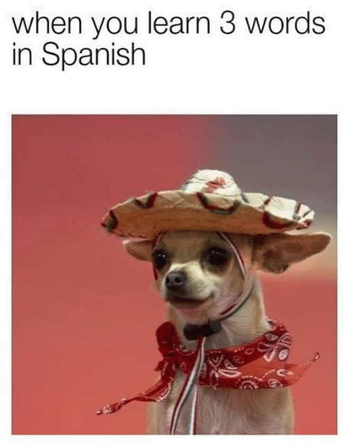 Memes, Spanish, and 🤖: when you learn 3 words  in Spanish