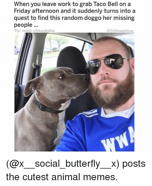 Friday, Memes, and Reddit: When you leave work to grab Taco Bell on a  Friday afternoon and it suddenly turns into a  quest to find this random doggo her missing  people  Pic: reddit u/hikesforlife  @DrSmashlove (@x__social_butterfly__x) posts the cutest animal memes.