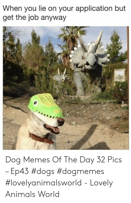 Animals, Dogs, and Memes: When you lie on your application but  get the job anyway Dog Memes Of The Day 32 Pics – Ep43 #dogs #dogmemes #lovelyanimalsworld - Lovely Animals World