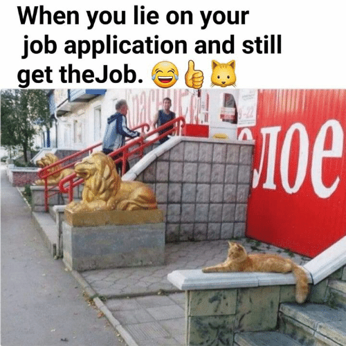 Memes, 🤖, and Job: When you lie on your  job application and still  get theJob.